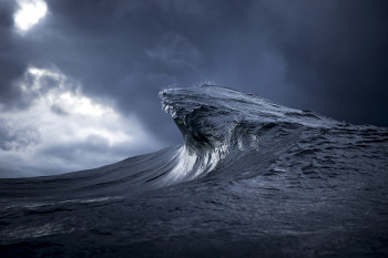 Ray Collins / Blue Hook / Juror's Award